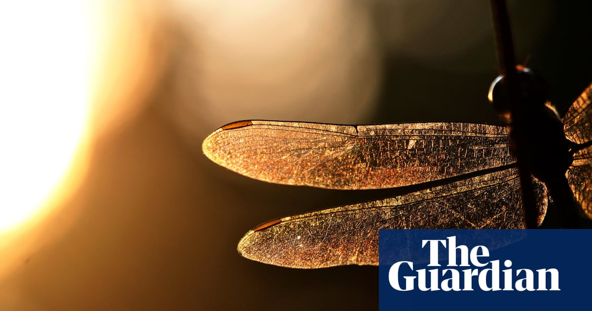 English Magic by Uschi Gatward review – exquisitely eerie withholding