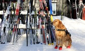 a dog outside Tryvannstua Hut, near Oslo's Winter Park