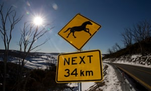 A brumby warning sign on the Snowy Mountains Highway