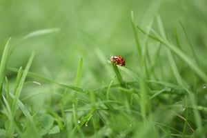 A ladybird in West Sussex.