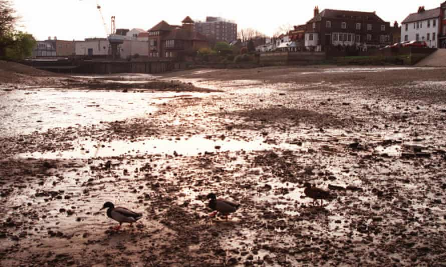 Ducks walk along the dry river bed of the river Thames at Isleworth, west London, in 1999. Two years of drought and unseasonably dry weather led to unusually low water levels.