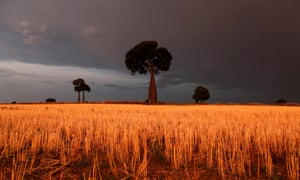 Storm clouds approach a wheatfield near Roma