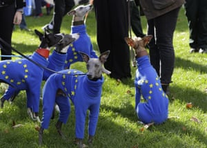 A pack of pro-EU whippets