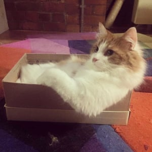 'Gucci pictured in his fave shoebox waiting for his human to feed him.'