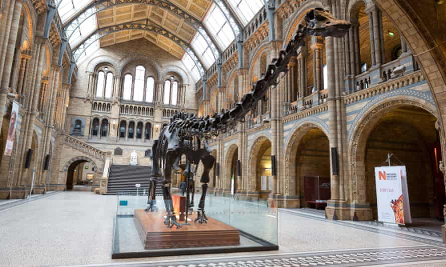 The Dippy skeleton at the Natural History Museum, London. Dismantling will start on Wednesday.