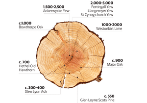 Infographic of tree ages