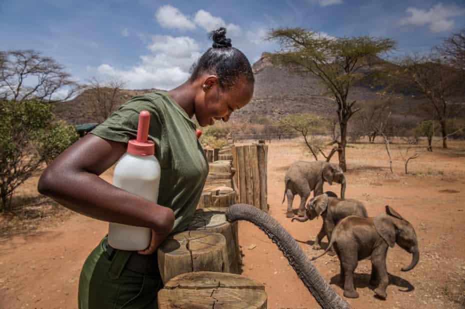 Feeding time at Reteti Elephant Sanctuary