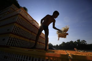A young man loads chickens into cages that are then  loaded on to rafts. to be taken across the Suchiate river to Guatemala.
