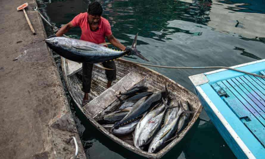 A fisherman with yellowfin tuna at Malé fish market in the Maldives. The country landed 44,000 tonnes of the fish in 2019, far less than the EU's 70,000 tonnes.