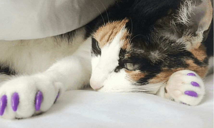 A 'peticured' cat shows off its claws