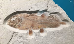 Portsmouth, UK. Fossilised remains of a fish that grew as big as a great white shark, and the largest of its type ever found, have been discovered by accident by scientists from the University of Portsmouth