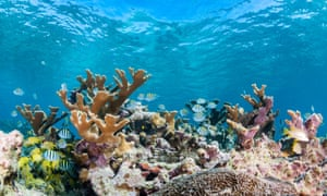 Underwater reef scene showing hard corals and schools of tropical fish in shallow water, Gardens of the Queens, Cuba.
