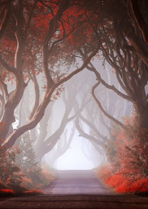 By Declan Keane. This was taken amid the beech trees at the Dark Hedges in Antrim, Northern Ireland (a filming location for Game of Thrones), early on an August morning. I was fortunate to be there on a foggy morning as it really added to the overall mood of the image.