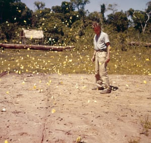 Paraguay. A butterfly swarm at Ilrevu-qua. 'Nowhere else had I seen so many. Not only were there vast numbers of individuals but also a great number of different species. To amuse myself when we had nothing better to do, I began to collect some.'