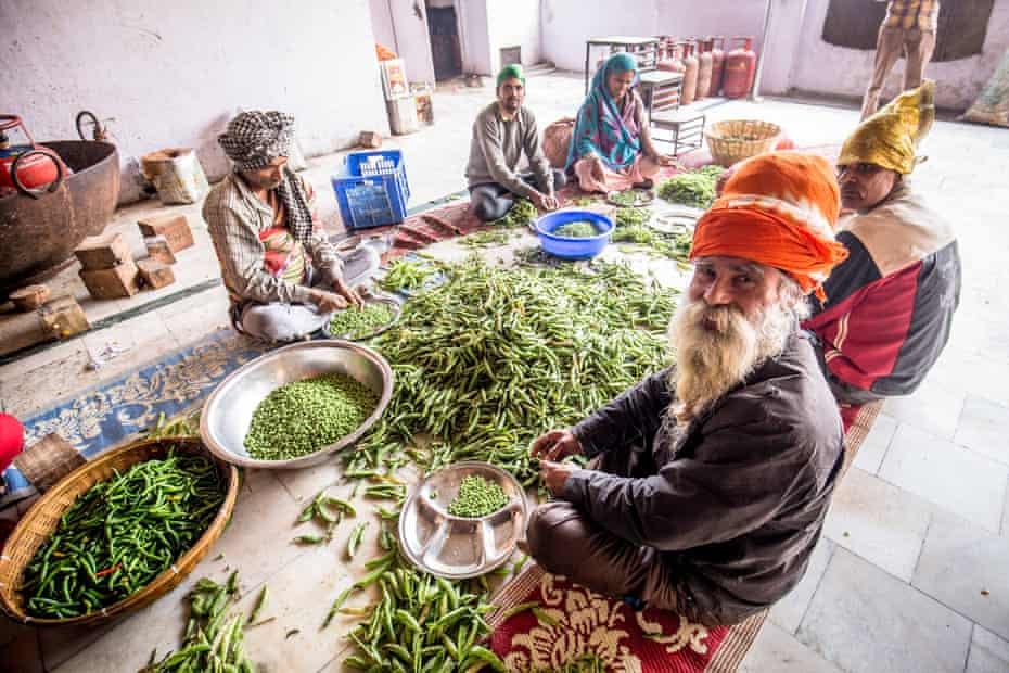 Shelling peas in Delhi's Gurudwara Sis Ganj Sikh temple – 7,000 people, of all religions, are fed here for free every day
