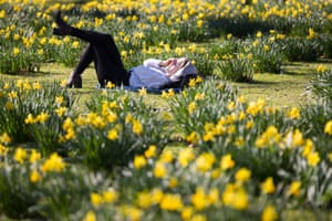 London, EnglandA woman relaxes in the daffodils during sunny spring weather in St James's Park. Reports state that 25 February 2019 is the hottest recorded February day in Britain since records began. It is the first time a temperature of over 20 Celsius (Centigrade) has been recorded in winter
