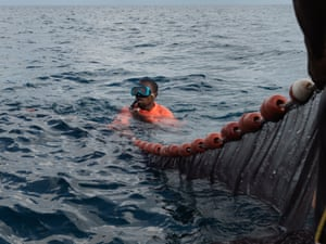 Divers shepherd fish into nets