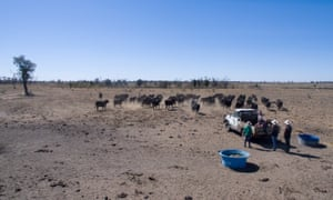 Drought-affected farm in Queensland
