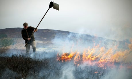 Tom Adamson, Gamekeeper for the Bolton Abbey Estate uses a Batter to smother the flames during Moorland Burning on Barden Moor in the Yorkshire Dales. To its critics Moorland Burning is damaging to the environment, it releases millions of tonnes of greenhouse gasses, destroys habitats and increases the threat of flooding in lowland rivers. Most controversially, the vast estates in Northern England and Scotland, which charge hunters up to £23,000 a day in the Autumn, burn patches of heather to remove cover for predators and create space for green shoots to be eaten by grouse. However the defenders of the practice argue it prevents wild fires by creating narural breaks and preserves a valued landscape that would otherwise revert to scrubland. They claim opposition is motivated by hostility to grouse shooting.