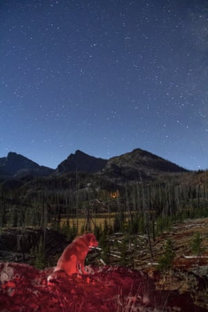 My dog Oli scans the night landscape near Lillypad lake in Idaho's Seven Devils mountains and Hells Canyon wilderness area. Campfire light flickers in the distance, warming some neighboring backpackers. This was taken during the super blood moon eclipse 27 September 2015. Normally during a full moon, almost all the stars seen here would be invisible. The passing of Earth's shadow across the surface of the moon provided a unique opportunity to view stars, landscape and a rare lunar event all at the same time