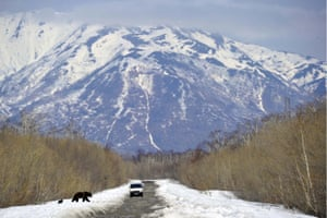 A bear with newborn cub crosses a road in Kamchatka, Russia