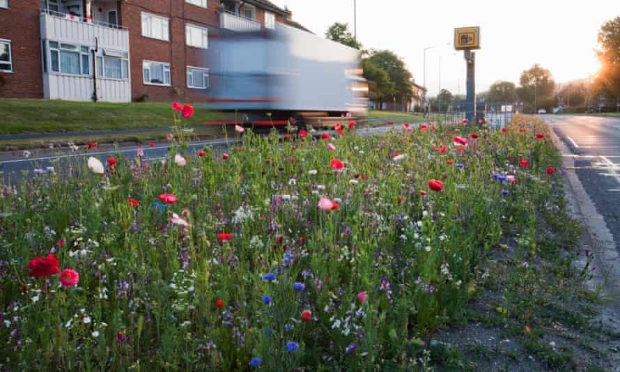 Wildflowers flowering in a road verge in Brighton.