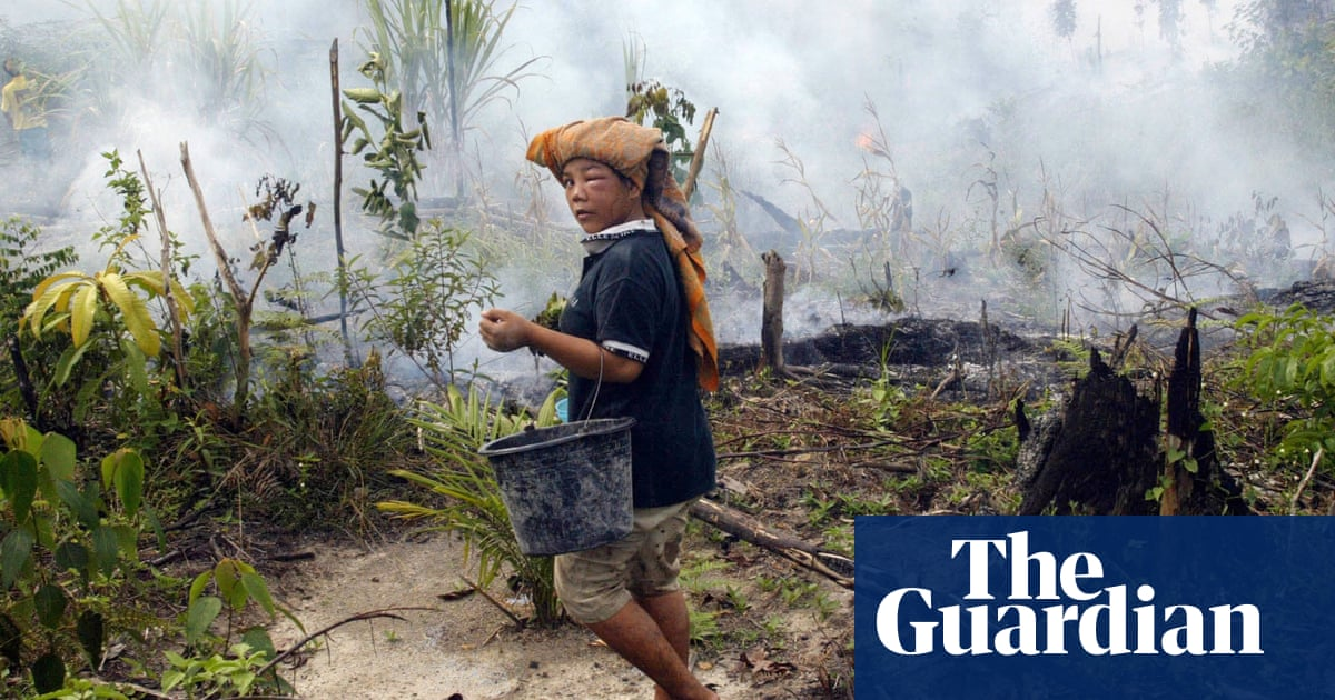 7c74b0497c The palm oil plantations powering communities and tackling climate change