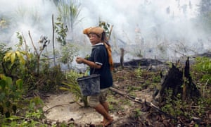 A villager walks past a smoldering field lit for land-clearing in order to grow palm oil in Minas, Riau province, Sumatra, Indonesia.