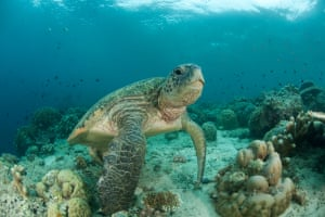 A marine turtle under water