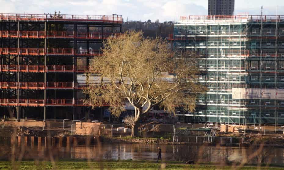 The Lady Bay white poplar in Nottingham