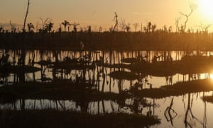 Dead trees stand in a recently deforested section of the Amazon rainforest