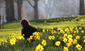 A woman relaxes among daffodils during warm weather in St James's Park.
