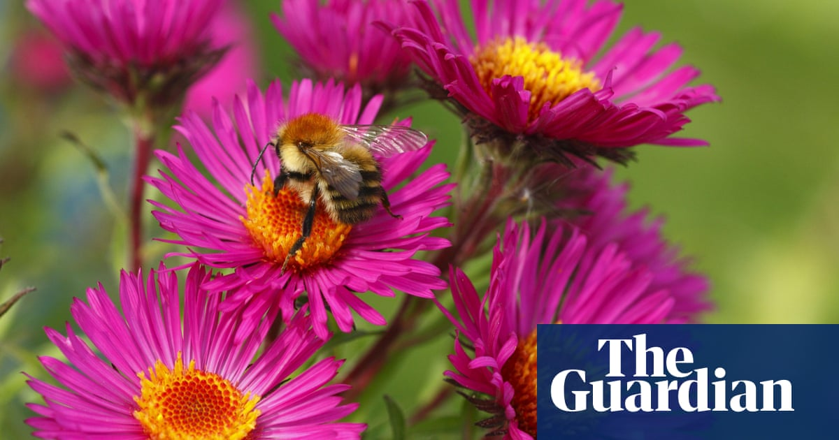 How Much Do You Know About Bees Quiz Environment The