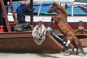 A man guides a horse onto a boat to transport it to the mainland from Gili Trawangan.