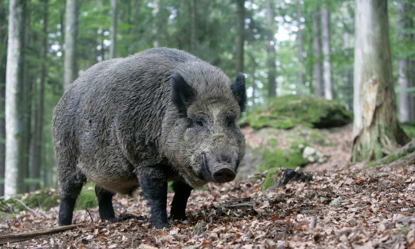 Italian hunter killed his father thinking he was wild boar, say police