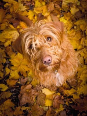 Third place, Dog Portrait:'Bella in Autumn Leaves' was the title for the photo of this young Labradoodle