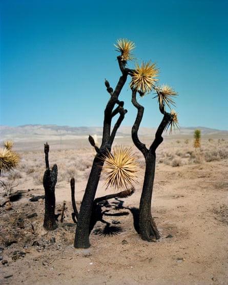 Burned Cactus Tree by Gregory Halpern