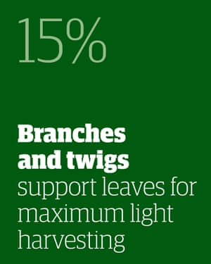 15% - branches and twigs support leaves for maximum light harvesting