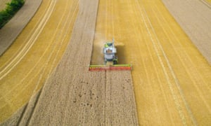 A combine harvester cutting through crops