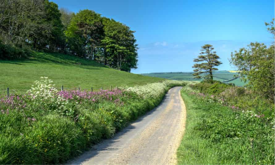 Hedgerows are coming into leaf ... a Dorset lane in spring.