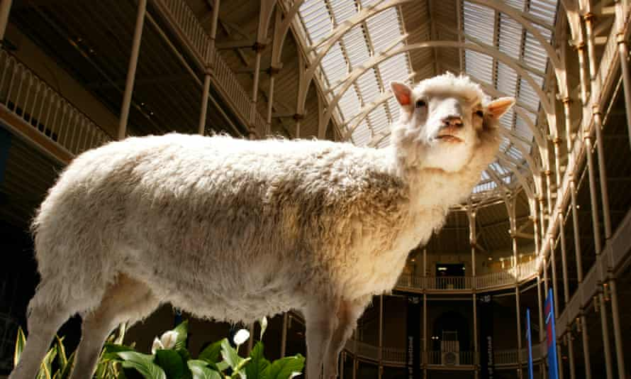 A stuffed sheep; the photo is taken from the animal's feet and looks up at her - behind the vaulted glass ceilings of the museum. She is uplit, almost like a religious statue.