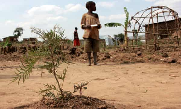 Refugees from Burundi have been given tree seedlings to plant in Rubondo village, in Nakivale.