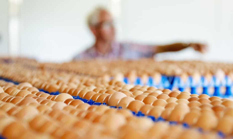 Eggs stored at a poultry farm in Putten, Netherlands, one of those shut down by Dutch food safety officials.