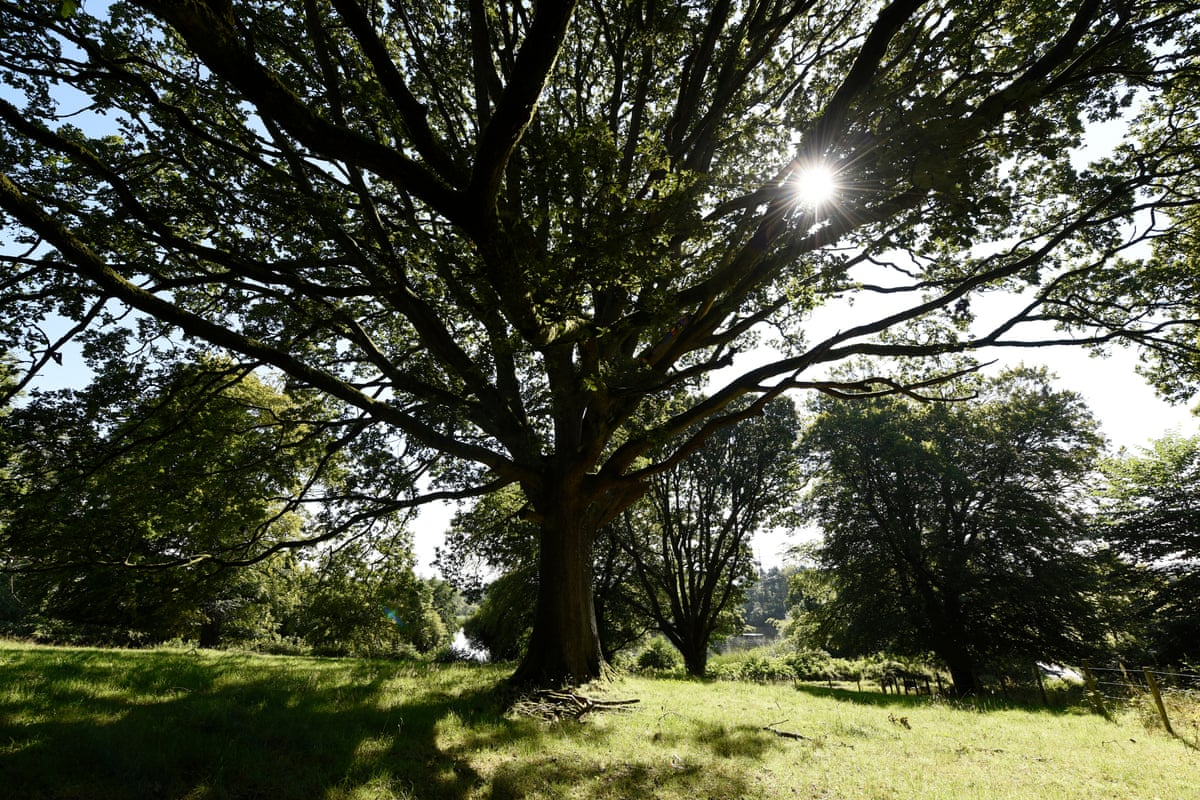 Woodland Trust S Tree Of The Year In Pictures