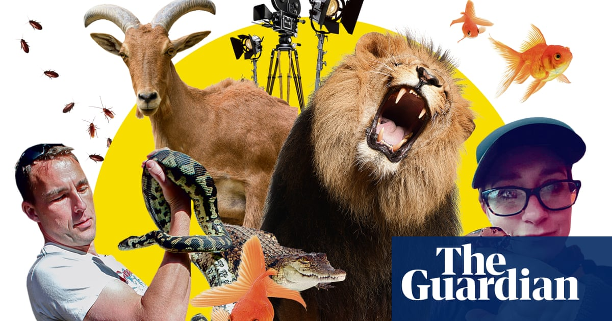 'Make sure they don't eat the set!' Movie animal trainers' tips