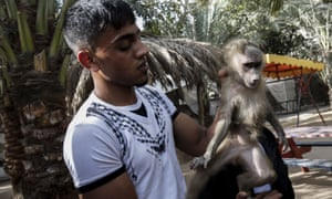 Forty animals were rescued from squalid conditions in Gaza .