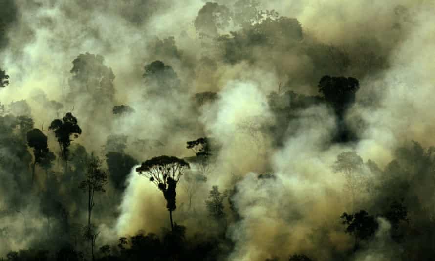 In 2016 deforestation in the Amazon rainforest increased by 29%.