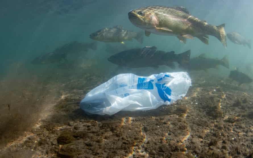 Fish swim alongside litter in the Wye river, Derbyshire.