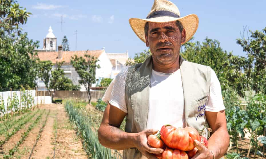 Man with armful of Giant tomatoes freshly picked at Casa Mae