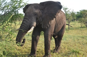 A colleague said Roger Gower was shot as he approached an elephant carcass.